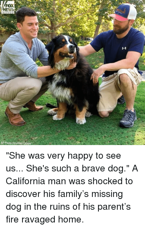 "Family, Fire, and Memes: FOX  NEWS  AP Photo/ Jonathan Co ""She was very happy to see us... She's such a brave dog."" A California man was shocked to discover his family's missing dog in the ruins of his parent's fire ravaged home."