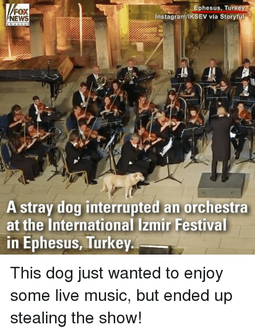 Turkeyism: FOX  NEWS  Ephesus, Turkey  Instagram/IKSEV via Storyful  A stray dog interrupted an orchestra  at the International Izmir Festival  in Ephesus, Turkey This dog just wanted to enjoy some live music, but ended up stealing the show!