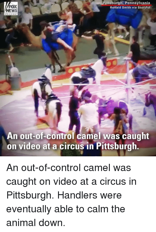 Memes, News, and Control: FOX  NEWS  ittsburgh, Pennsylvania  Ronald Smith via Storyful  An out-of-control camel was caught  on video at a circus in Pittsburgh An out-of-control camel was caught on video at a circus in Pittsburgh. Handlers were eventually able to calm the animal down.