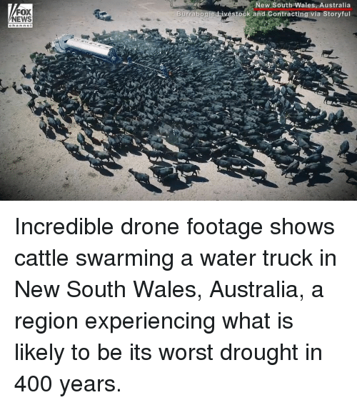 Drone, Memes, and News: FOX  NEWS  New South Wales, Australia  Burrabogie Livestock and Contracting via Storvful Incredible drone footage shows cattle swarming a water truck in New South Wales, Australia, a region experiencing what is likely to be its worst drought in 400 years.
