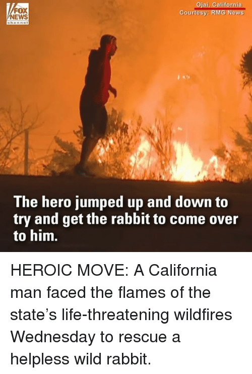Come Over, Life, and Memes: FOX  NEWS  Ojai, California  Ceurtesy: RMG News  The hero jumped up and down to  try and get the rabbit to come over  to him. HEROIC MOVE: A California man faced the flames of the state's life-threatening wildfires Wednesday to rescue a helpless wild rabbit.