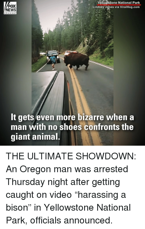 """Memes, News, and Shoes: FOX  NEWS  Yellowstone National Park  Lindsey Jones via ViralHog.com  chan nol  It gets even more bizarre when a  man with no shoes confronts the  giant animal THE ULTIMATE SHOWDOWN: An Oregon man was arrested Thursday night after getting caught on video """"harassing a bison"""" in Yellowstone National Park, officials announced."""