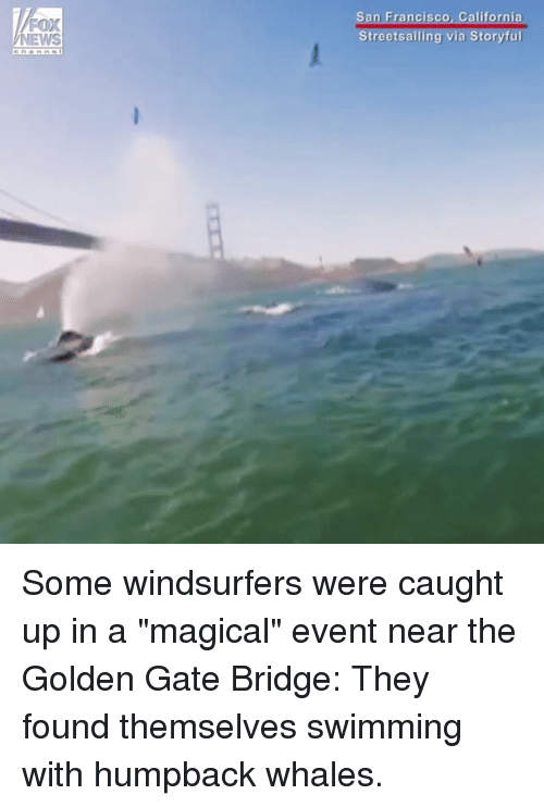 "Francisco: FOX  San Francisco, Cali Some windsurfers were caught up in a ""magical"" event near the Golden Gate Bridge: They found themselves swimming with humpback whales."