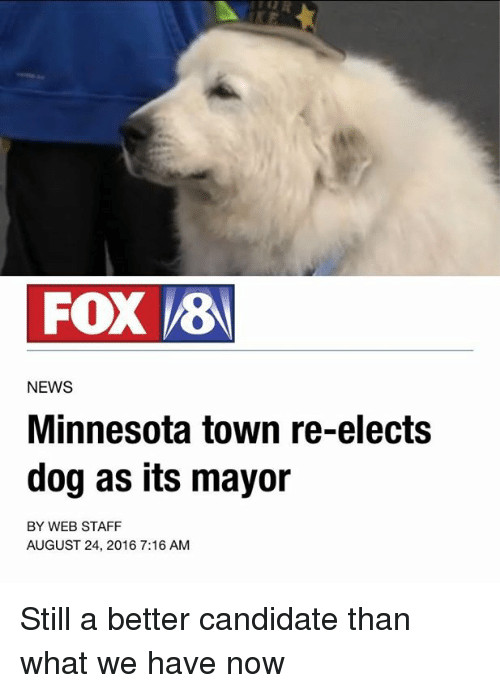 Dogs, News, and Minnesota: FOX  VEB  NEWS  Minnesota town re-elects  dog as its mayor  BY WEB STAFF  AUGUST 24, 2016 7:16 AM Still a better candidate than what we have now
