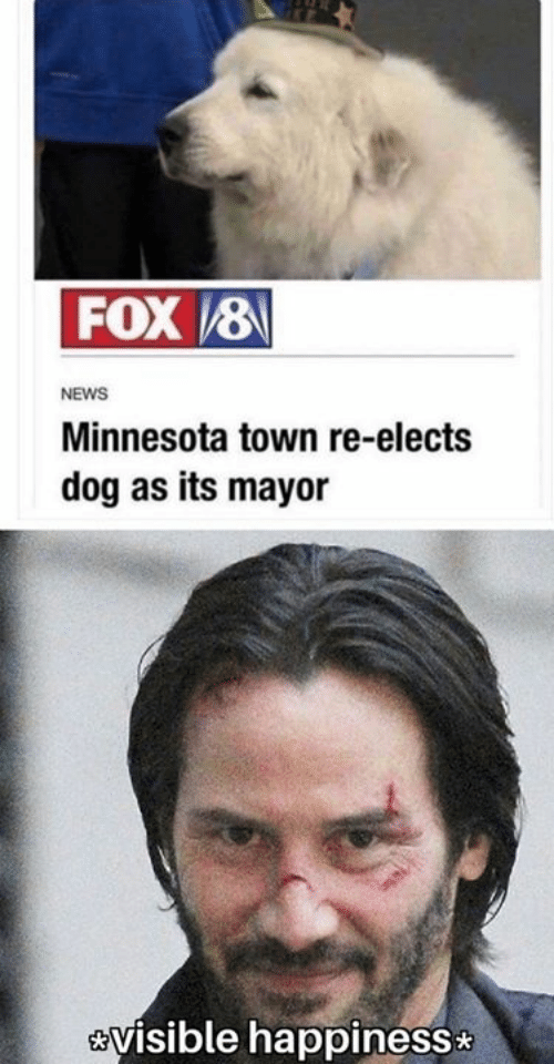mayor: FOX8  NEWS  Minnesota town re-elects  dog as its mayor  visible happiness