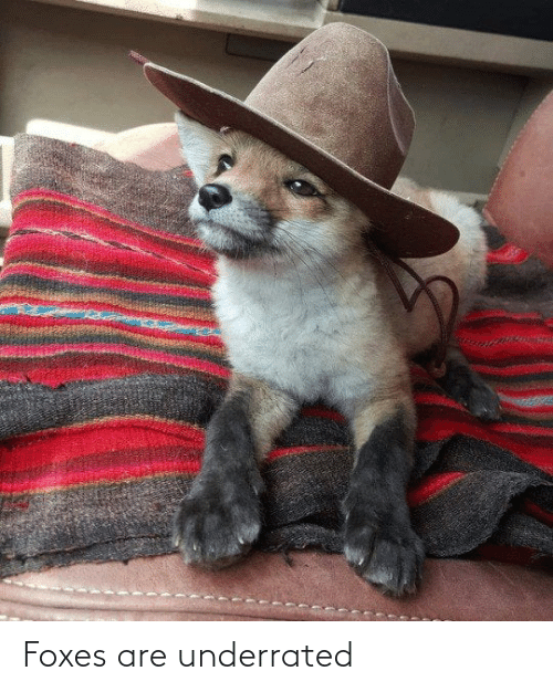 foxes: Foxes are underrated