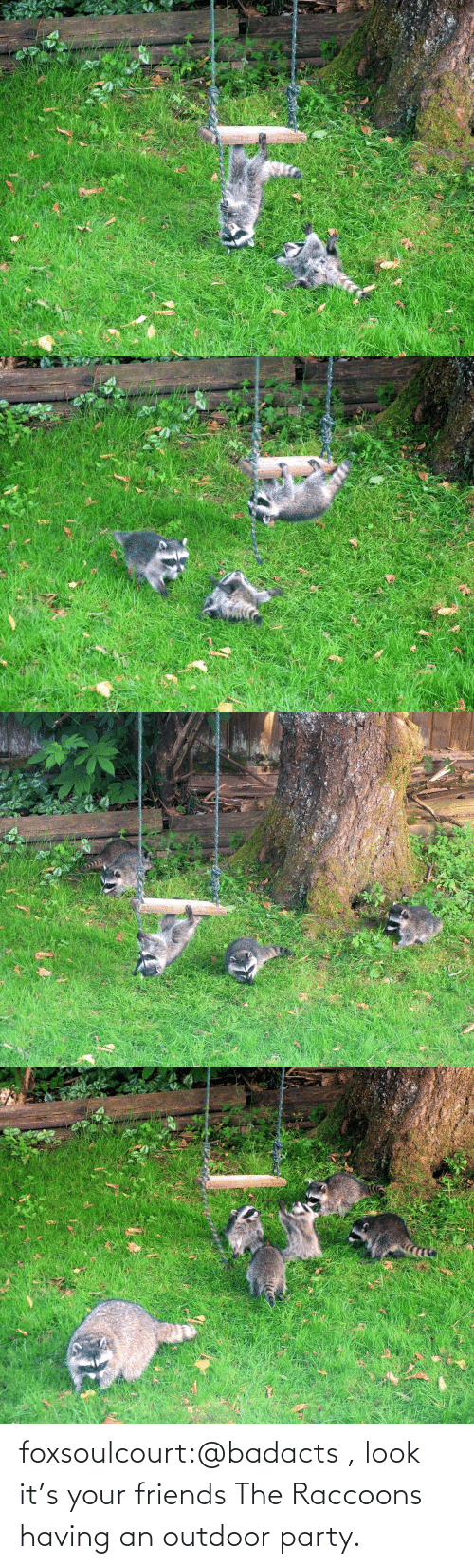 raccoons: foxsoulcourt:@badacts , look it's your friends The Raccoons having an outdoor party.