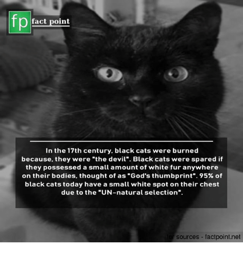 """Bodies , Cats, and Memes: fp  fact point  In the 17th century, black cats were burned  because, they were """"the devil"""" Black cats were spared if  they possessed a small amount of white fur anywhere  on their bodies, thought of as """"God's thumbprint"""". 95% of  black cats today have a small white spot on their chest  due to the """"UN-natural selection"""".  sources factpoint.net"""