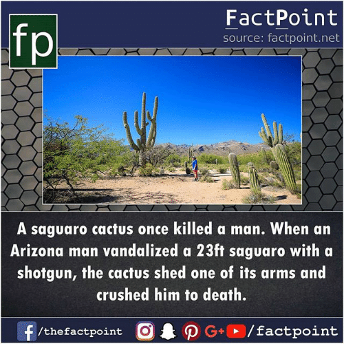 Memes, Arizona, and Death: fp  FactPoint  source: factpoint.net  A saguaro cactus once killed a man. When an  Arizona man vandalized a 23ft saguaro with a  shotgun, the cactus shed one of its arms and  crushed him fo death.  /thefactpoint O