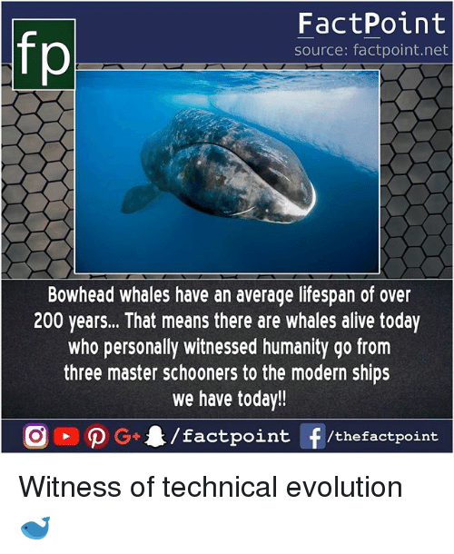 modernism: fp  FactPoint  source: factpoint.net  Bowhead whales have an average lifespan of over  200 years... That means there are whales alive today  who personally witnessed humanity go from  three master schooners to the modern ships  we have today!! Witness of technical evolution 🐋