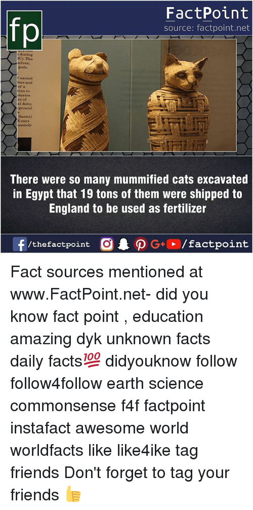 Cats, England, and Facts: fp  FactPoint  source: factpoint.net  during  3C). The  selves:  gods.  f sncred  ters and  of a  tion to  rs of  al deity  und  Baxtet)  rays  rately  There were so many mummified cats excavated  in Egypt that 19 tons of them were shipped to  England to be used as fertilizer  9  3 Fact sources mentioned at www.FactPoint.net- did you know fact point , education amazing dyk unknown facts daily facts💯 didyouknow follow follow4follow earth science commonsense f4f factpoint instafact awesome world worldfacts like like4ike tag friends Don't forget to tag your friends 👍