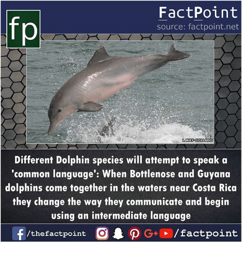 Memes, Common, and Costa Rica: fp  FactPoint  source: factpoint.net  MAY COLLADO  Different Dolphin species will attempt to speak a  'common language': When Bottlenose and Guyand  dolphins come together in the waters near Costa Rica  they change the way they communicate and begin  using an intermediate language  /thefactpoint C