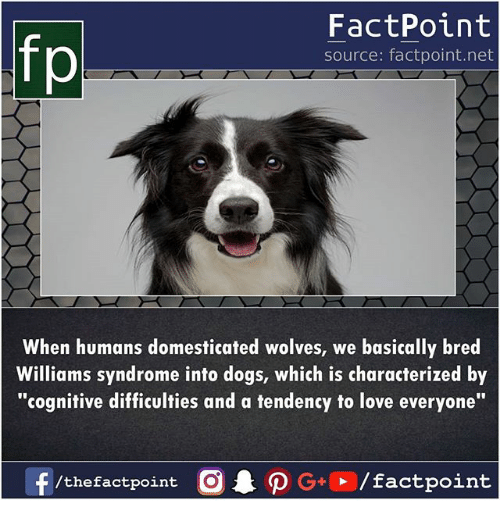 """Dogs, Love, and Memes: fp  FactPoint  source: factpoint.net  When humans domesticated wolves, we basically bred  Williams syndrome into dogs, which is characterized by  """"cognitive difficulties and a tendency to love everyone"""""""