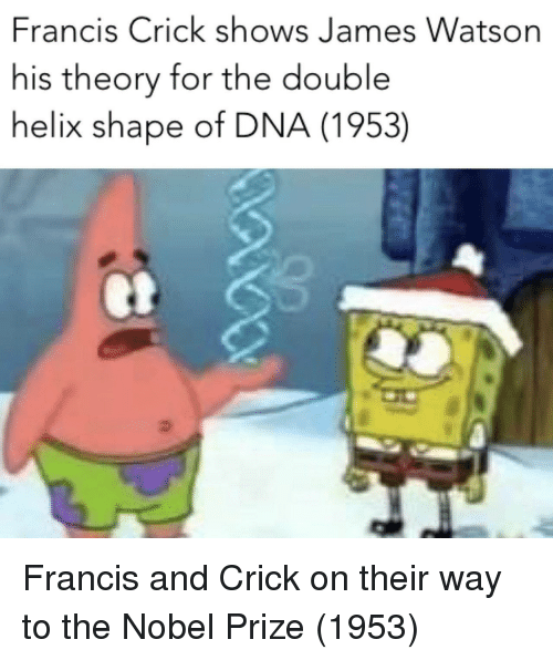 Nobel Prize: Francis Crick shows James Watson  his theory for the double  helix shape of DNA (1953) Francis and Crick on their way to the Nobel Prize (1953)
