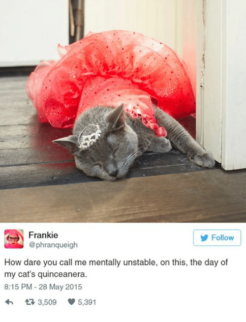 Quinceanera: Frankie  Follow  phranqueigh  How dare you call me mentally unstable, on this, the day of  my cat's quinceanera.  8:15 PM 28 May 2015  t 3,509  5,391