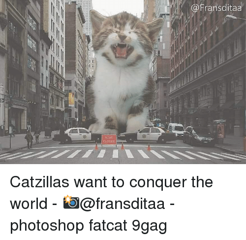 9gag, Memes, and Photoshop: @Fransditaa  ROAD  CLOSED Catzillas want to conquer the world - 📸@fransditaa - photoshop fatcat 9gag