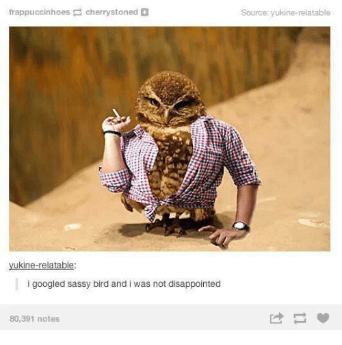 Googłe: frappuccinhoes  Cherry stoned  ukine relatable  i googled sassy bird and i was not disappointed  80,391 notes  Source: yukine relatable