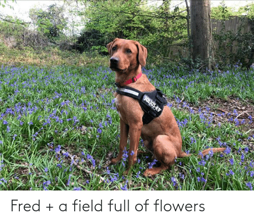 fred: Fred + a field full of flowers