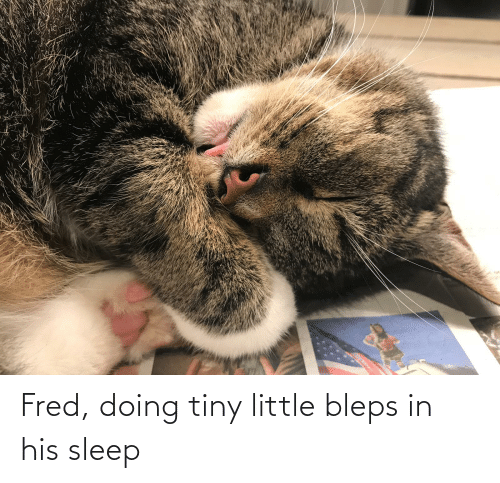 fred: Fred, doing tiny little bleps in his sleep