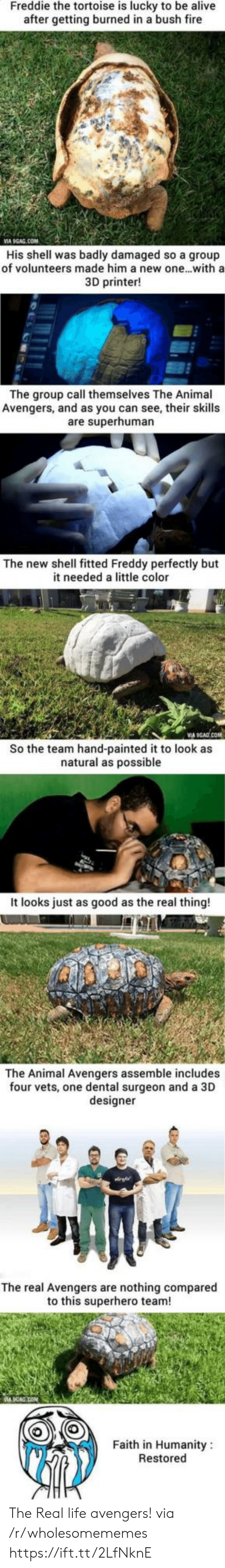 freddy: Freddie the tortoise is lucky to be alive  after getting burned in a bush fire  VIA 9GAG.COM  His shell was badly damaged so a group  of volunteers made him a new one...with a  3D printer!  The group call themselves The Animal  Avengers, and as you can see, their skills  are superhuman  The new shell fitted Freddy perfectly but  it needed a little color  So the team hand-painted it to look as  natural as possible  It looks just as good as the real thing!  The Animal Avengers assemble includes  four vets, one dental surgeon and a 3D  designer  The real Avengers are nothing compared  to this superhero team!  Faith in Humanity  Restored The Real life avengers! via /r/wholesomememes https://ift.tt/2LfNknE