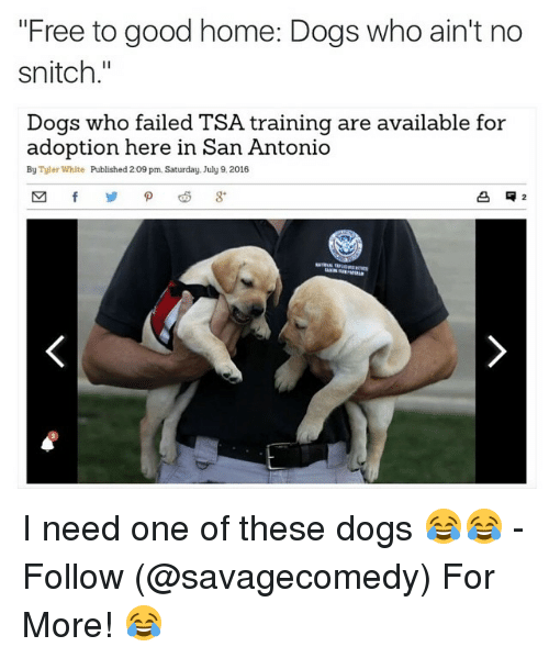 Free To Good Home Dogs Who Ain't No Snitch Dogs Who Failed