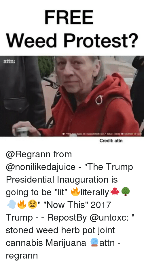 "Memes, 🤖, and Stone: FREE  Weed Protest?  attn:  Credit: attn @Regrann from @nonilikedajuice - ""The Trump Presidential Inauguration is going to be ""lit"" 🔥literally🍁🌳 💨🔥😫"" ""Now This"" 2017 Trump - - RepostBy @untoxc: "" stoned weed herb pot joint cannabis Marijuana 🔮attn - regrann"