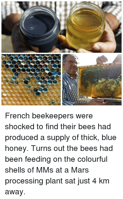 Colourful: French beekeepers were shocked to find their bees had produced a supply of thick, blue honey. Turns out the bees had been feeding on the colourful shells of MMs at a Mars processing plant sat just 4 km away.