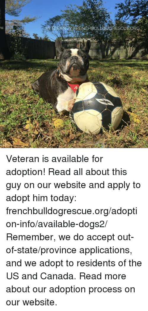 us-and-canada: FRENCHBULLGOGRESCU  EORG  4 Veteran is available for adoption! Read all about this guy on our website <location, likes, dislikes> and apply to adopt him today: frenchbulldogrescue.org/adoption-info/available-dogs2/  Remember, we do accept out-of-state/province applications, and we adopt to residents of the US and Canada. Read more about our adoption process on our website.