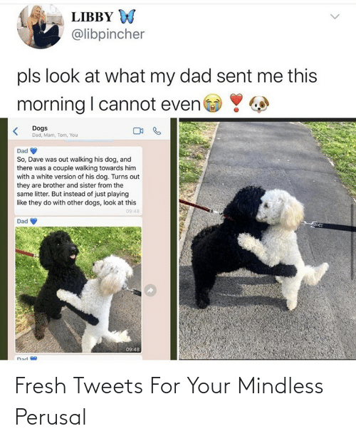Fresh: Fresh Tweets For Your Mindless Perusal