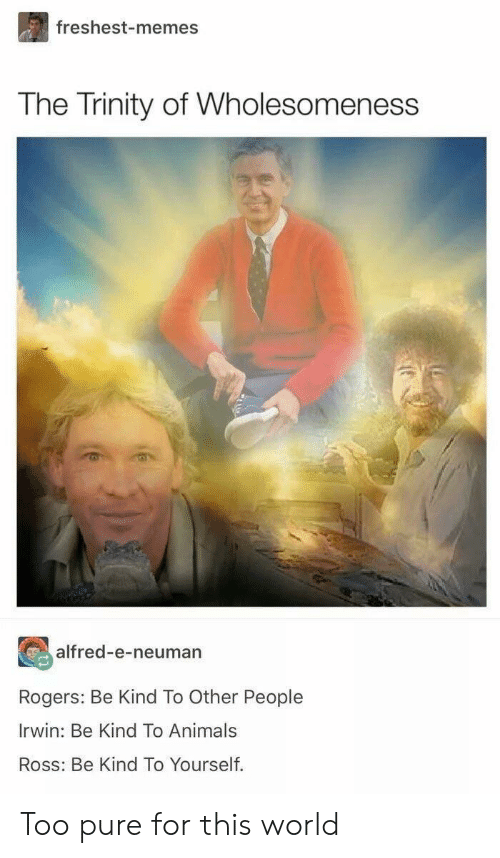 Too Pure: freshest-memes  The Trinity of Wholesomeness  alfred-e-neuman  Rogers: Be Kind To Other People  Irwin: Be Kind To Animals  Ross: Be Kind To Yourself. Too pure for this world