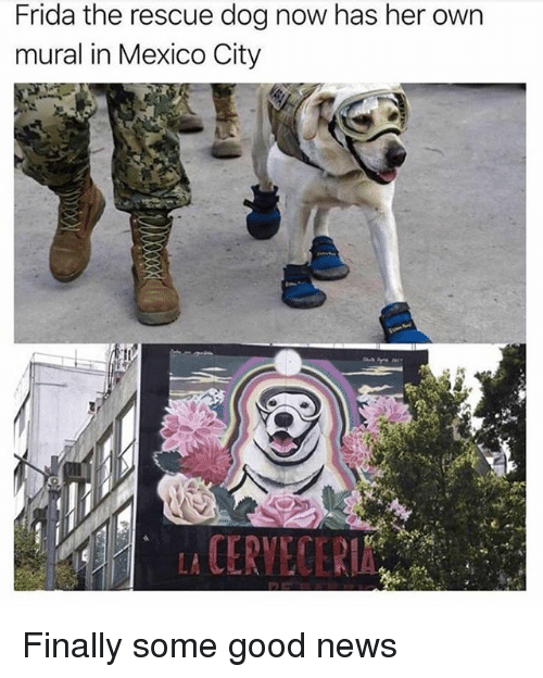 rescue dog: Frida the rescue dog now has her own  mural in Mexico City Finally some good news