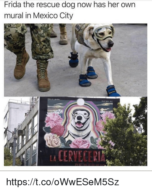 rescue dog: Frida the rescue dog now has her own  mural in Mexico City  CERVECER https://t.co/oWwESeM5Sz