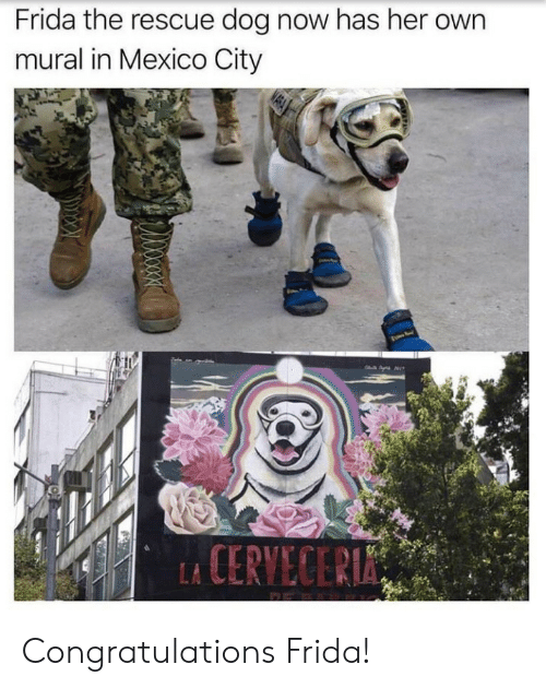 rescue dog: Frida the rescue dog now has her own  mural in Mexico City  CERVECER Congratulations Frida!