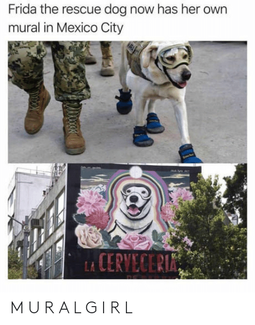 rescue dog: Frida the rescue dog now has her own  mural in Mexico City M U R A L G I R L