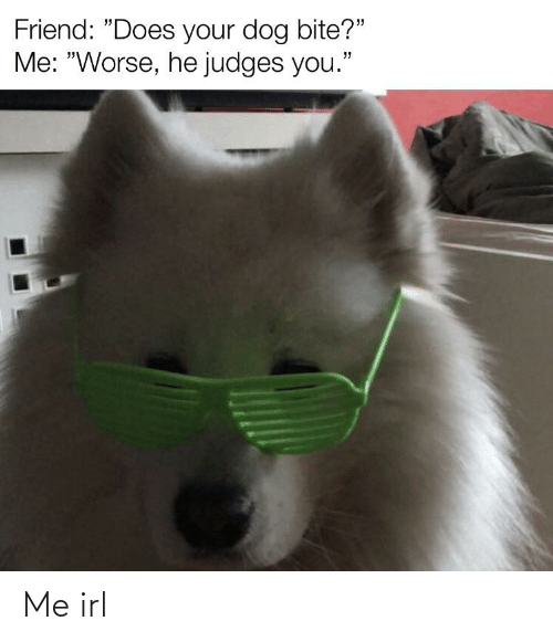"""Does Your Dog Bite: Friend: """"Does your dog bite?""""  Me: """"Worse, he judges you."""" Me irl"""