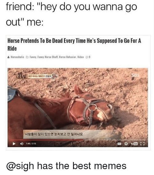 "Funny, Memes, and Best: friend: ""hey do you wanna go  out"" me  Horse Pretends To Be Dead Every Time He's Supposed To Go For A  Ride  읊 Horseaholic C Funny, Funny Horse Stuff, Horse Behavior. Video  9  사람들이 많이 있으면 눈치보고 안 일어나요  145/315 @sigh has the best memes"