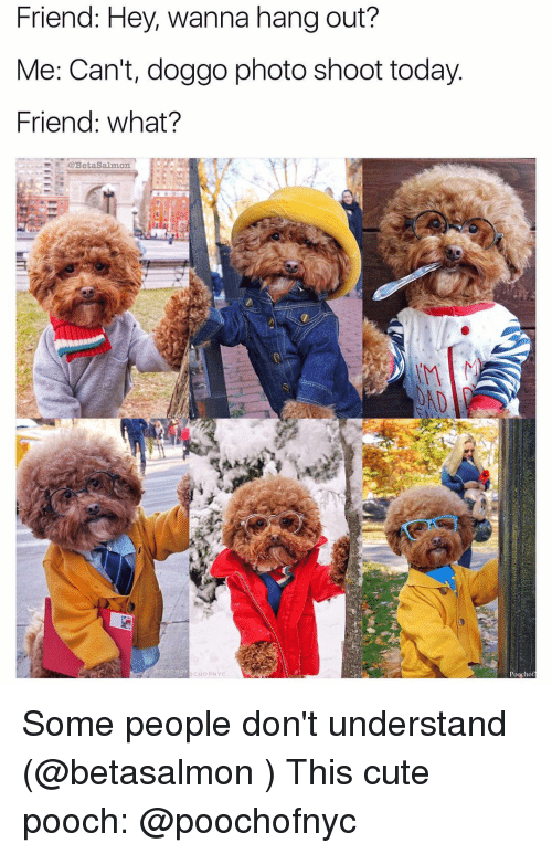 cho: Friend: Hey, wanna hang out?  Me: Can't, doggo photo shoot today  Friend: What?  @Beta Salmon.  CHO FNYC  Poocho Some people don't understand (@betasalmon ) This cute pooch: @poochofnyc