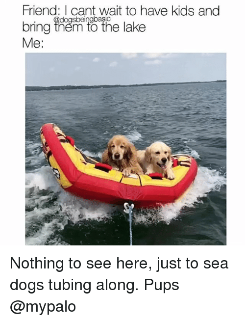 tubing: Friend: I cant wait to have kids and  bring ihen to the lake  Me:  dogsbeingbasic Nothing to see here, just to sea dogs tubing along. Pups @mypalo