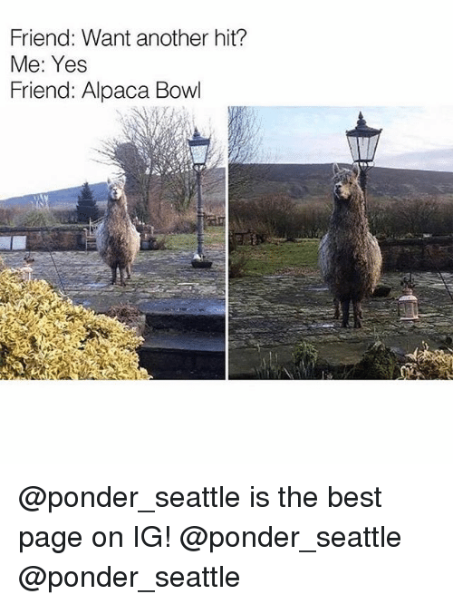 Weed, Best, and Marijuana: Friend: Want another hit?  Me: Yes  Friend: Alpaca Bowl @ponder_seattle is the best page on IG! @ponder_seattle @ponder_seattle