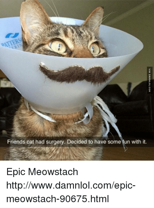 Friend Cat: Friends cat had surgery. Decided to have some fun with it. Epic Meowstach http://www.damnlol.com/epic-meowstach-90675.html