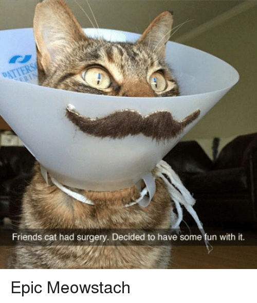 Friend Cat: Friends cat had surgery. Decided to have some fun with it. Epic Meowstach