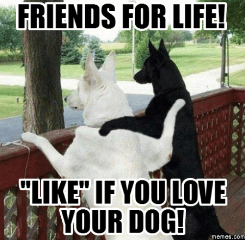 Life, Dog, and Com: FRIENDS FOR LIFE!  LIKE IF LOVE  YOUR DOG!  memes, COM