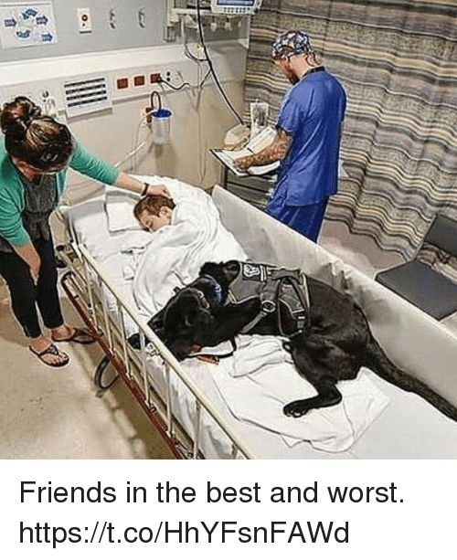 Friends, Memes, and Best: Friends in the best and worst. https://t.co/HhYFsnFAWd