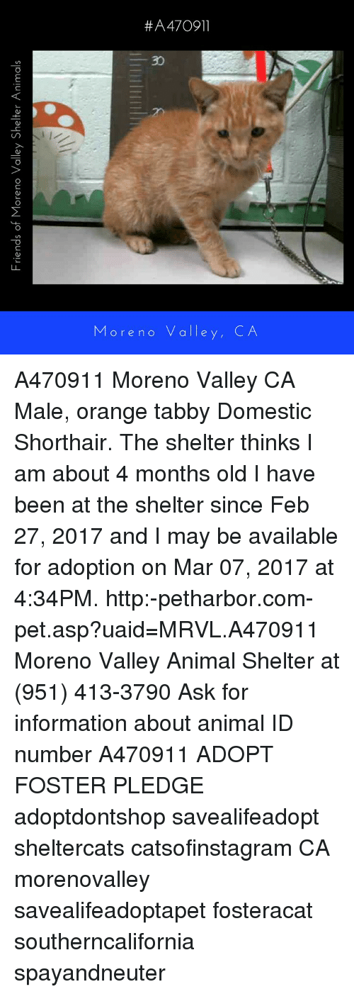 Memes, Mars, and 🤖: Friends of Moreno Valley Shelter Animals ore no valle