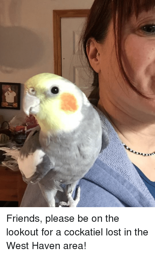 how to find a lost cockatiel
