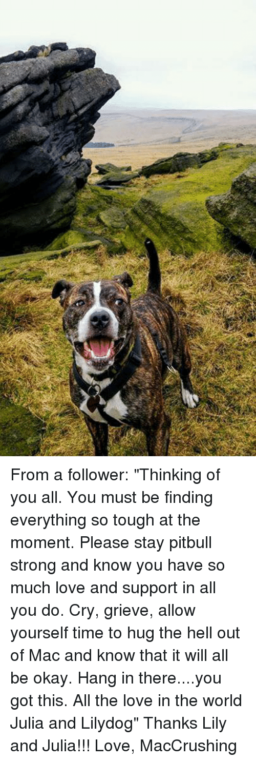 """Hanging In There: From a follower:   """"Thinking of you all. You must be finding everything so tough at the moment. Please stay pitbull strong and know you have so much love and support in all you do. Cry, grieve, allow yourself time to hug the hell out of Mac and know that it will all be okay. Hang in there....you got this.  All the love in the world Julia and Lilydog""""   Thanks Lily and Julia!!!   Love, MacCrushing"""
