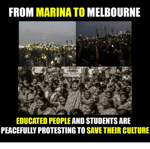 peaceful protest: FROM MARINA TO MELBOURNE  SAVE JALLIKATTE  EDUCATED PEOPLE AND STUDENTS ARE  PEACEFULLY PROTESTING TO  SAVE THEIR CULTURE
