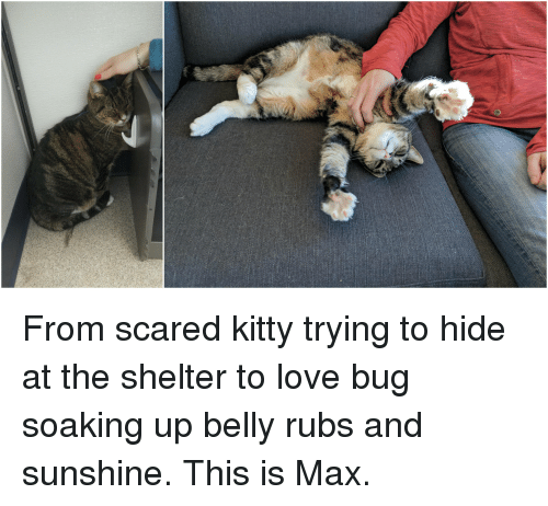 25+ Best Memes About Scared Kitty