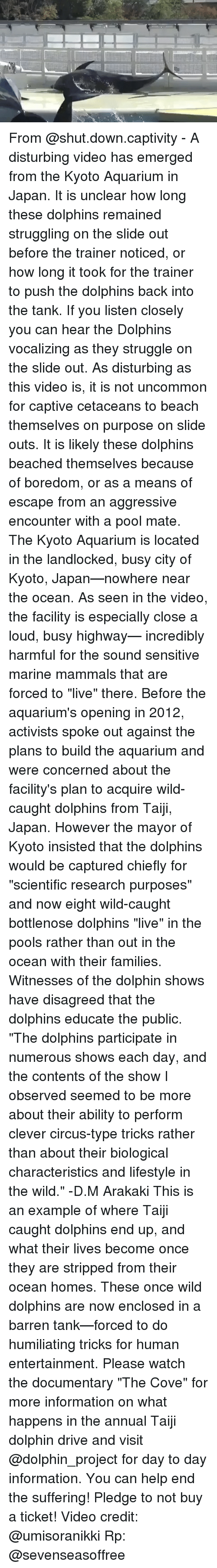 What are some examples of dolphin tricks?