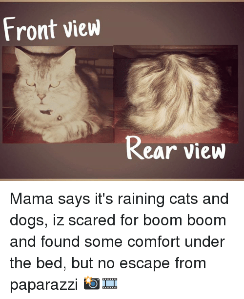 rain cat: Front view  Rear View Mama says it's raining cats and dogs, iz scared for boom boom and found some comfort under the bed, but no escape from paparazzi 📸🎞